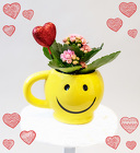 Love Smiles Blooming Plant from Rick Anthony's Flower Shoppe in Lansing and Holt, MI