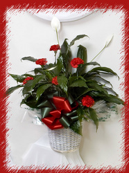 Peace Lily in Red