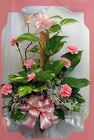 Pothos Plant With Carnations