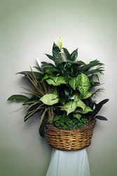 Planter / Dish Gardens of Tropical Plants from Rick Anthony's Flower Shoppe in Lansing and Holt, MI